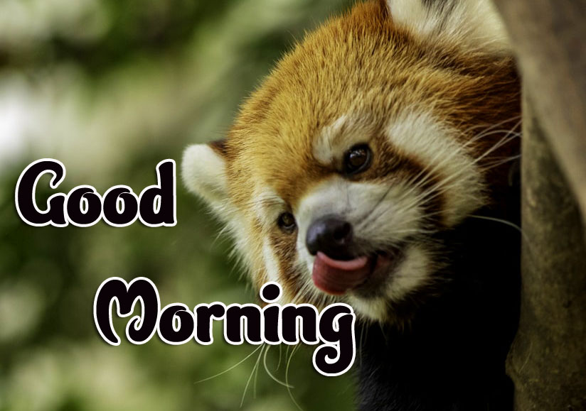 Animal Good morning Wishes Images Pics Wallpaper Free Download