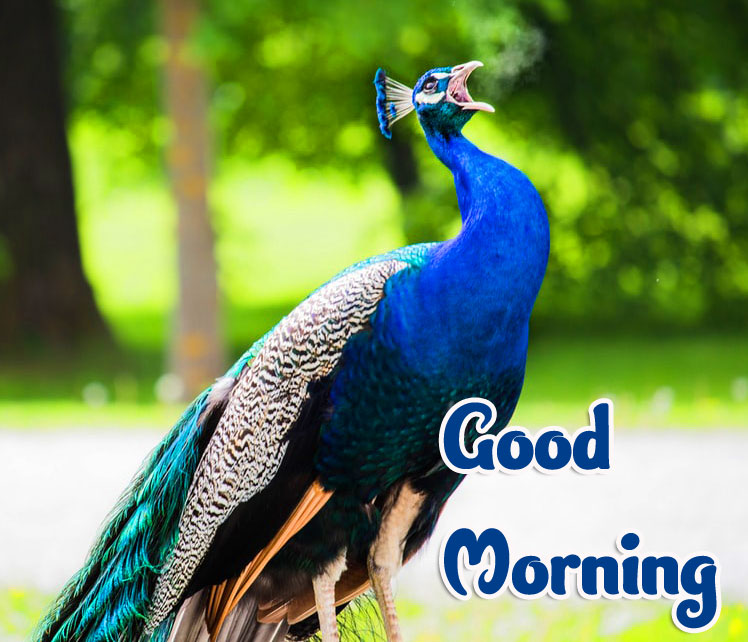 Animal Good morning Wishes Images Pics pictures Download