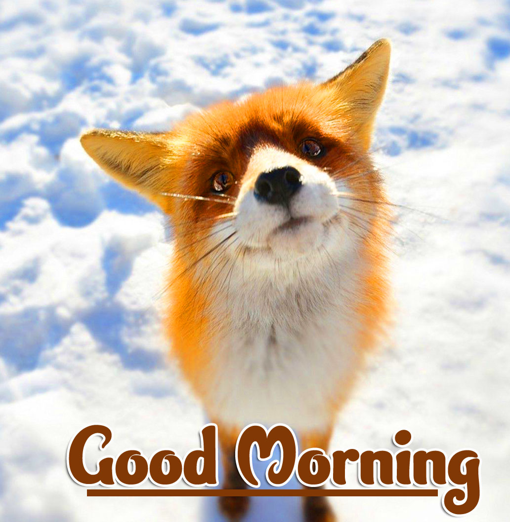 Animal Good morning Wishes Photo Pics Download