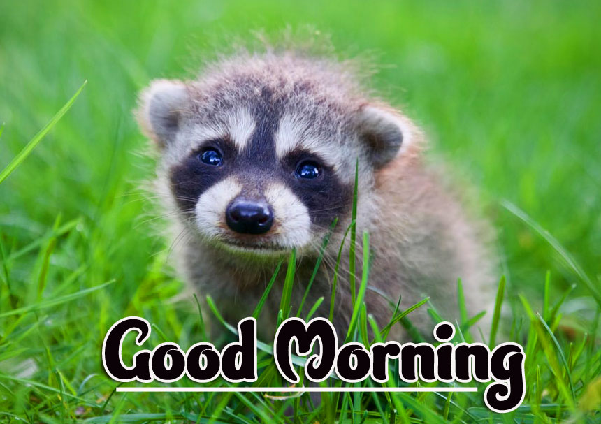 Animal Good morning Wishes Images Pics Download