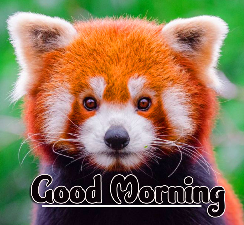Animal Good morning Wishes Images pics Wallpaper Download