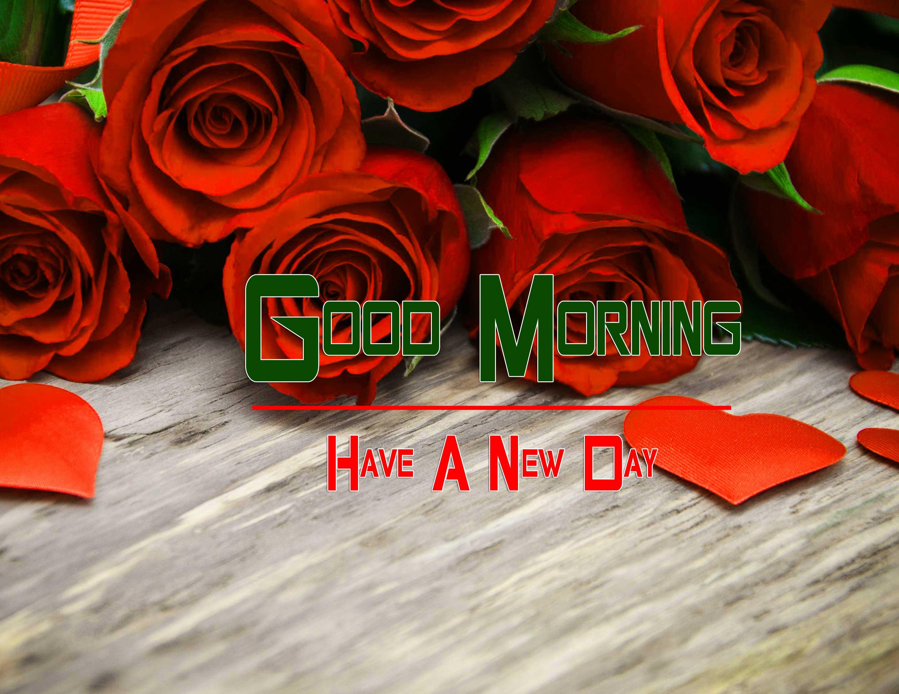 Beautiful Free Red Rose Good Morning Pics Download