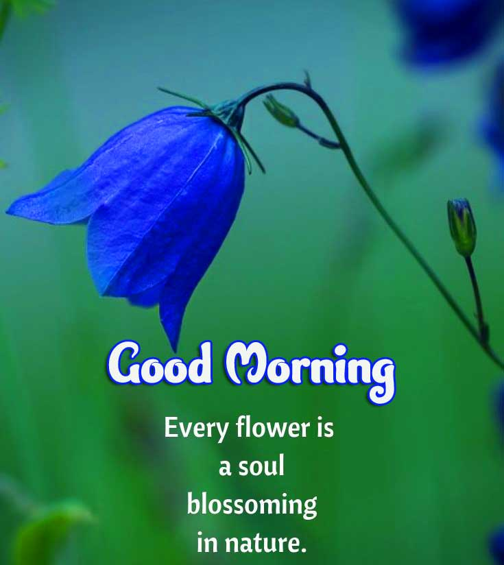 Beautiful Good Morning Images Download 10