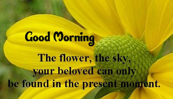 Beautiful Good Morning Images Download 24