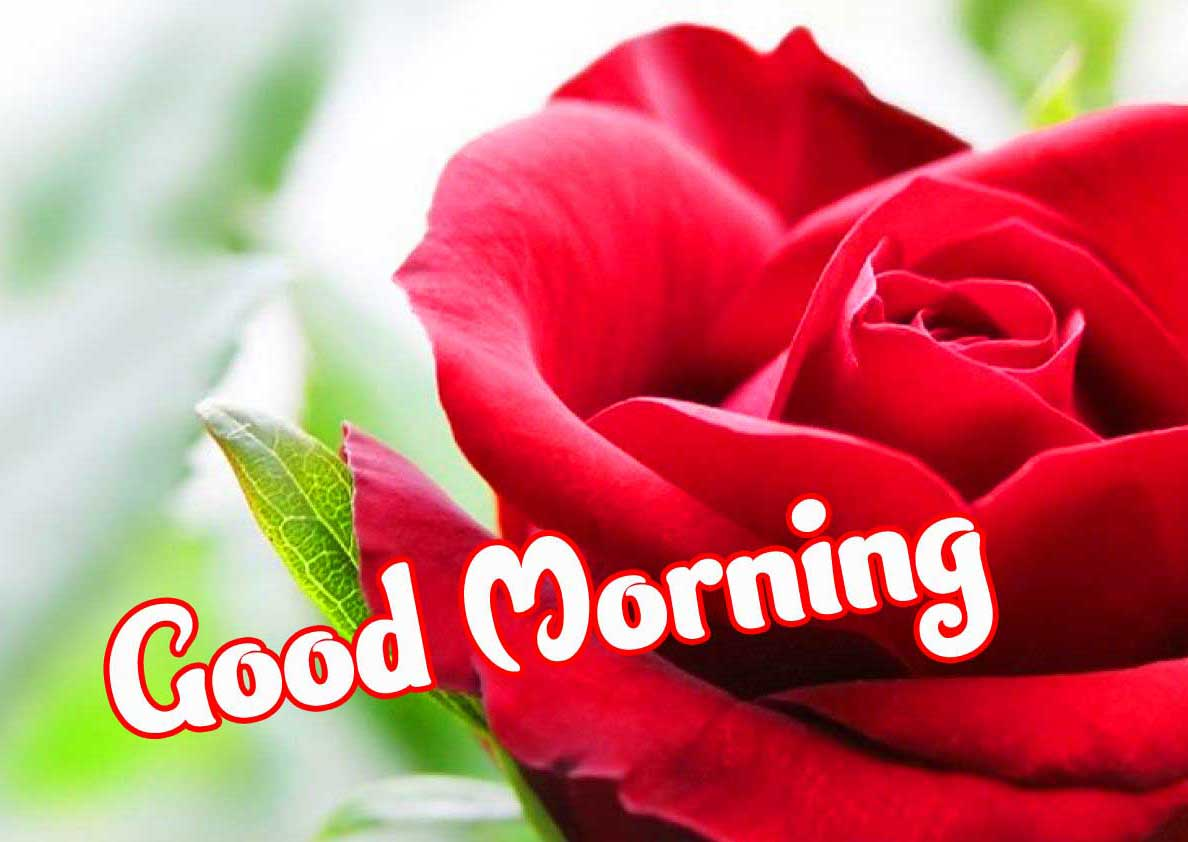 Beautiful Good Morning Images Download 37
