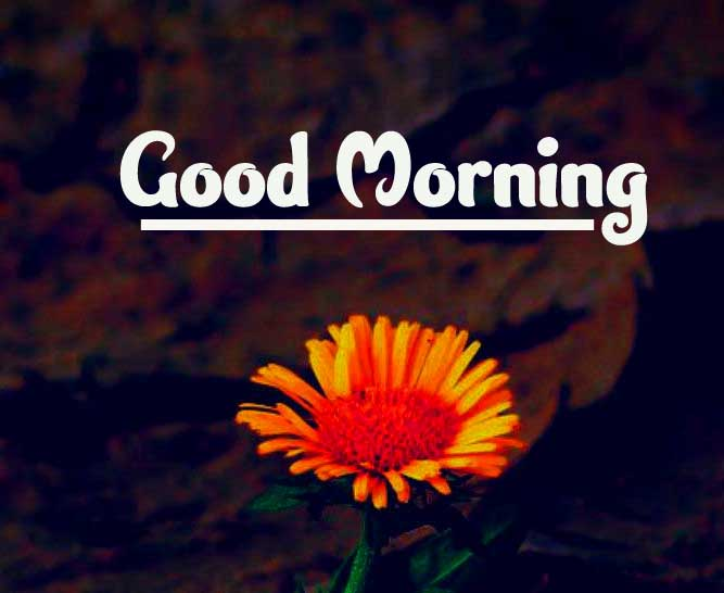 Beautiful Good Morning Images Download 38