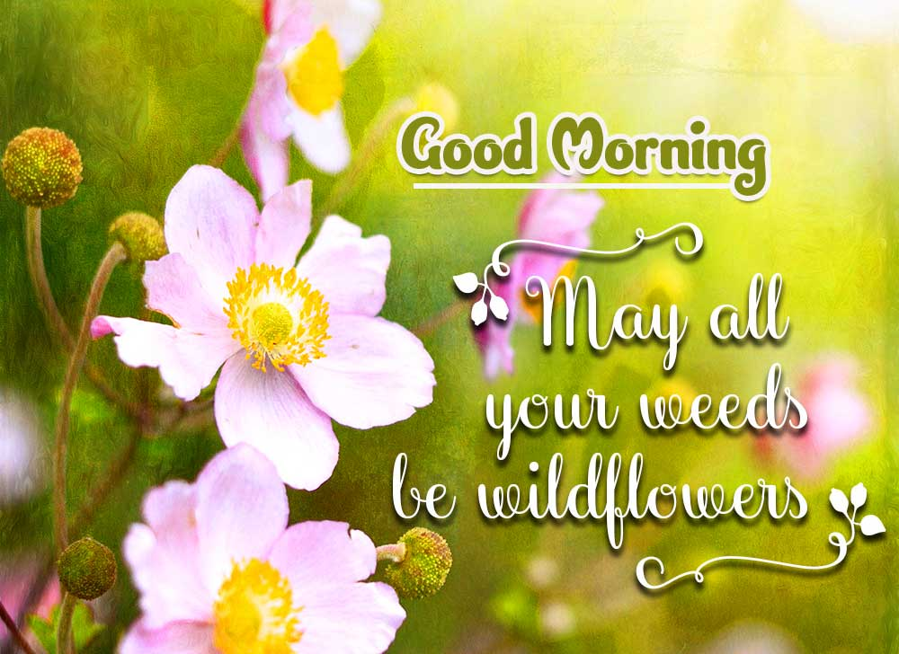 Beautiful Good Morning Images Download 90