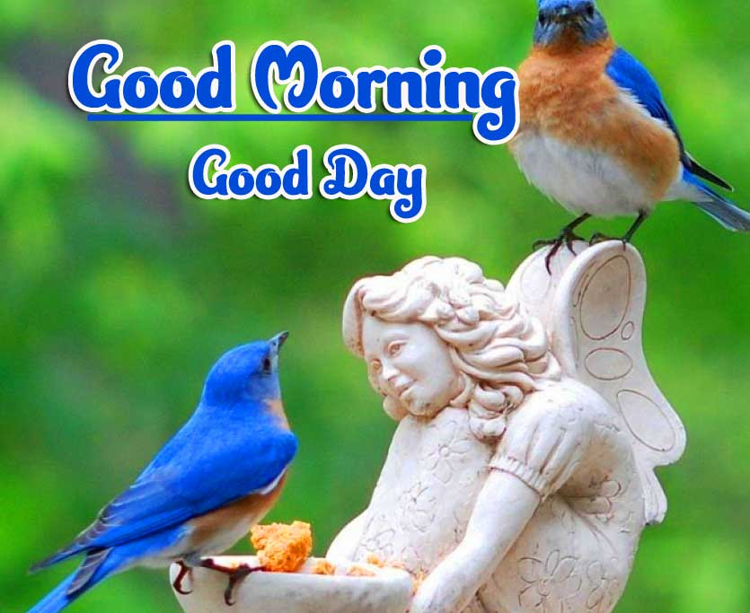 Best Good Morning Images Wallpaper for Whatsapp