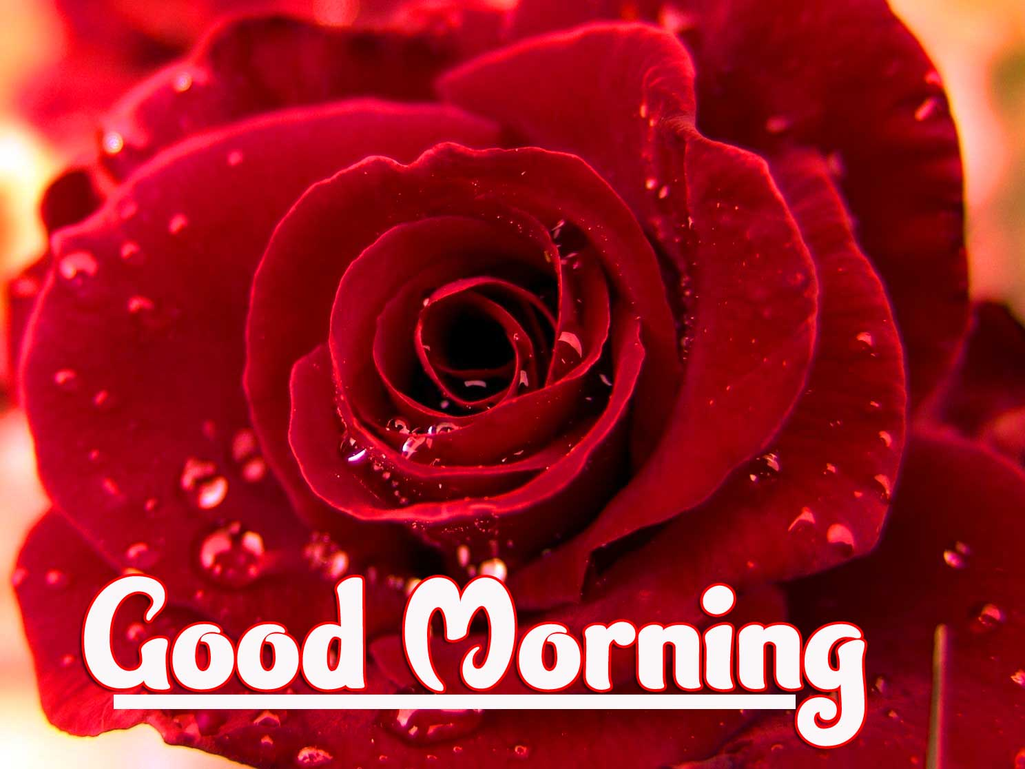 Latest free Best Good Morning Images Pics Download