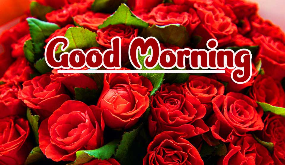Rose Best Good Morning Images Pics Wallpaper Download