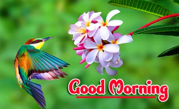 New Free Best Good Morning Images Pics Download