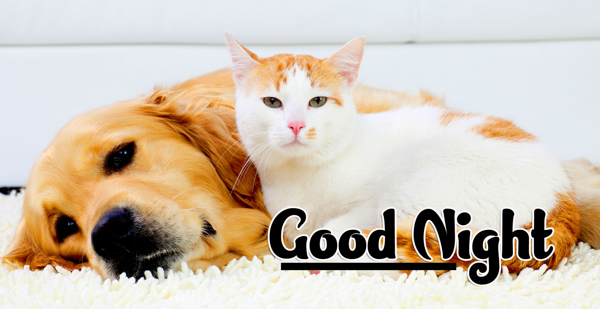 Cute Good Night Images Pics Wallpaper Free Download