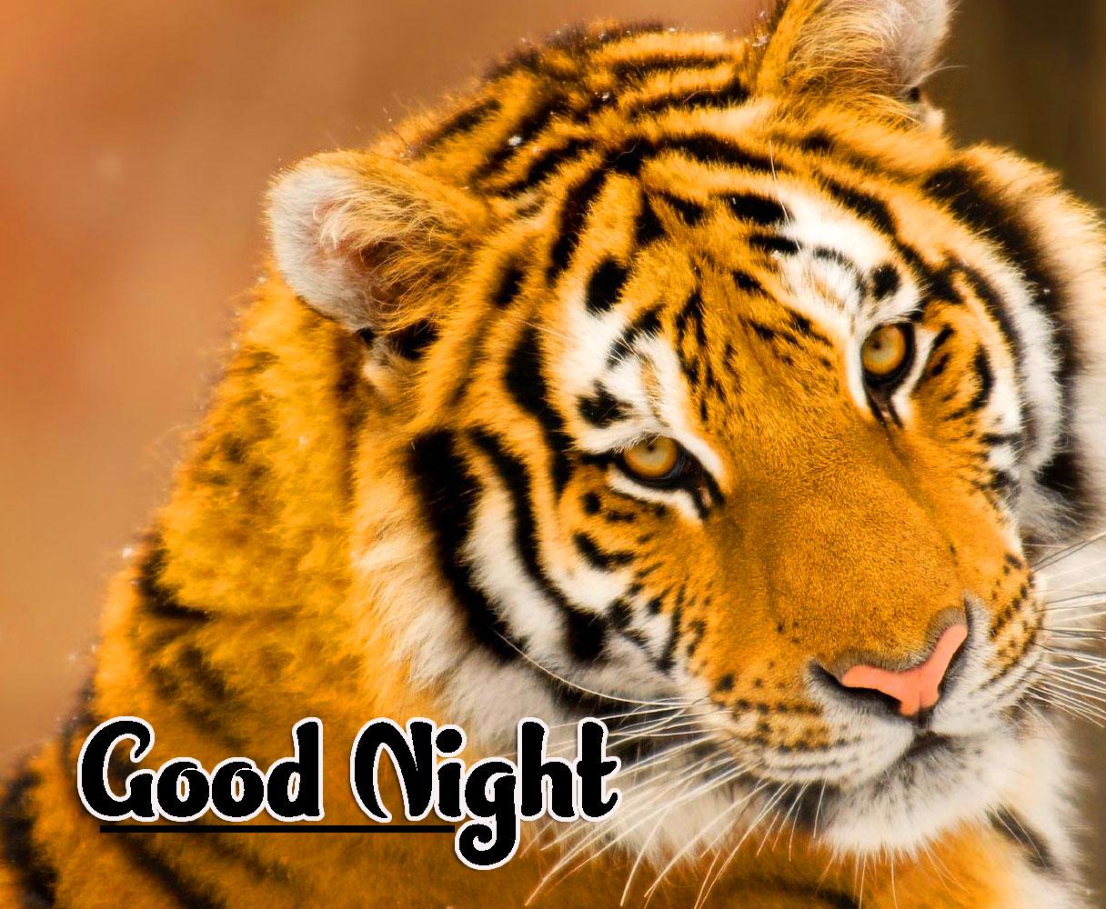 Cute Good Night Images Pics Wallpaper Download