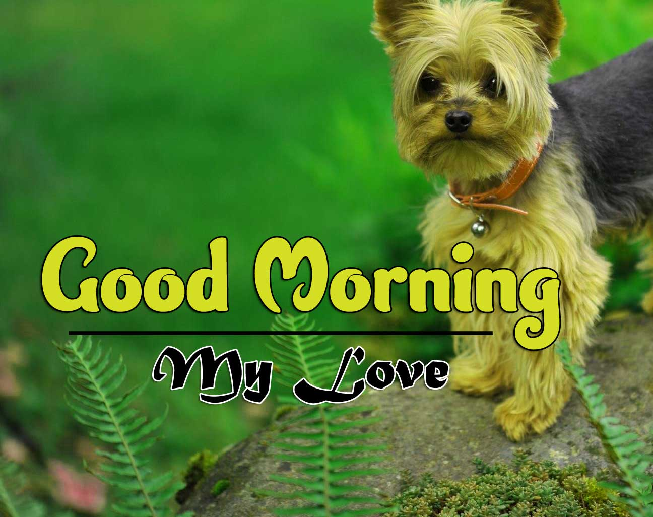 Cute Puppy Good Morning Pics Download for Whatsapp