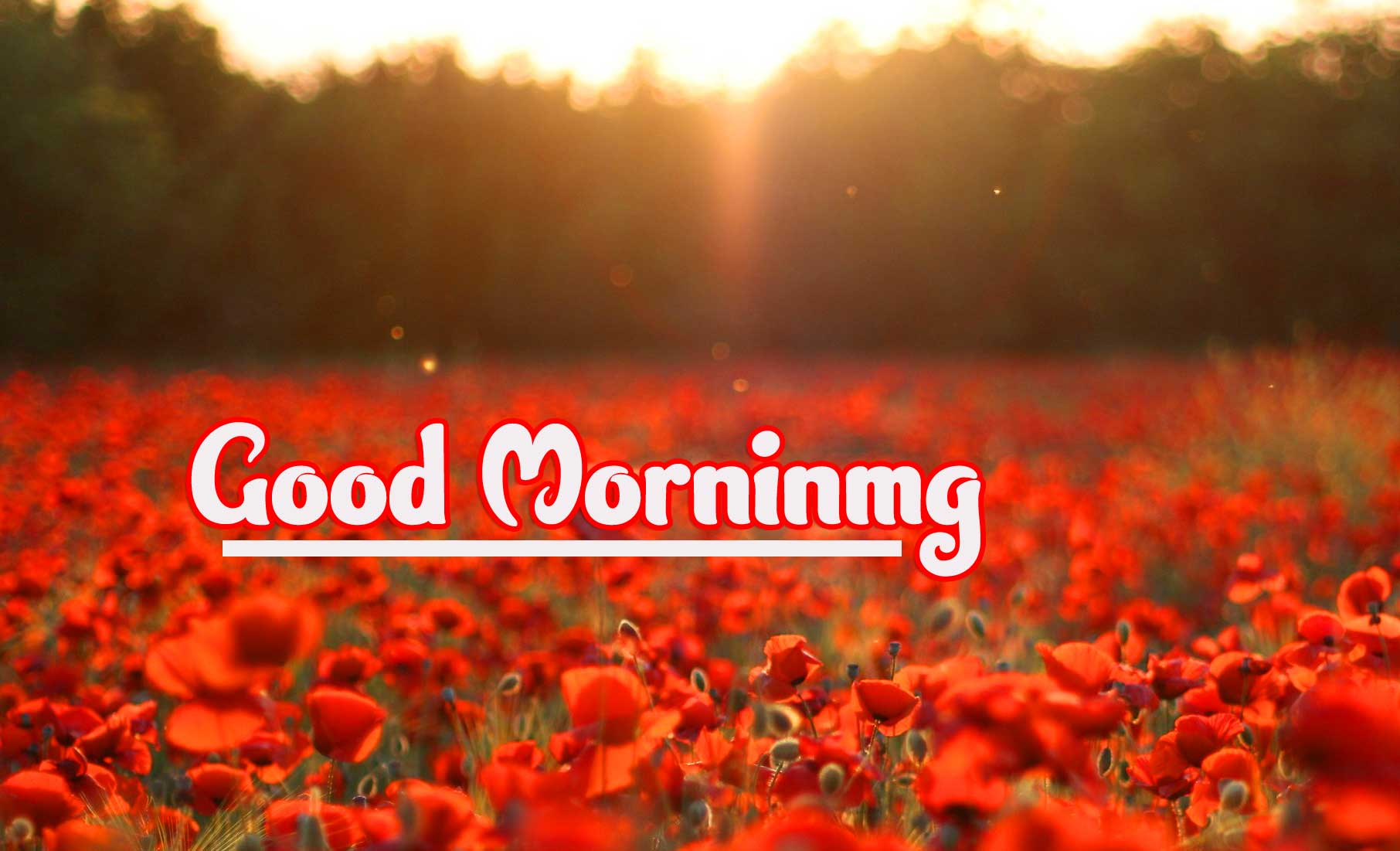 Sunrise Good Morning Wishes Images Pics Download
