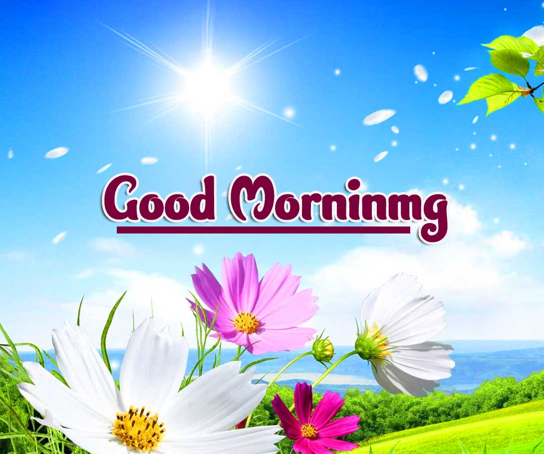 Beautiful Free Good Morning Wishes Images Pics Download