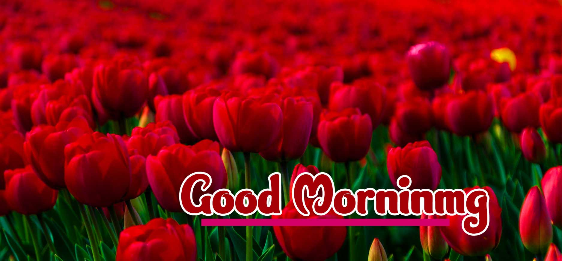 Good Morning Wishes Images Wallpaper Free Download