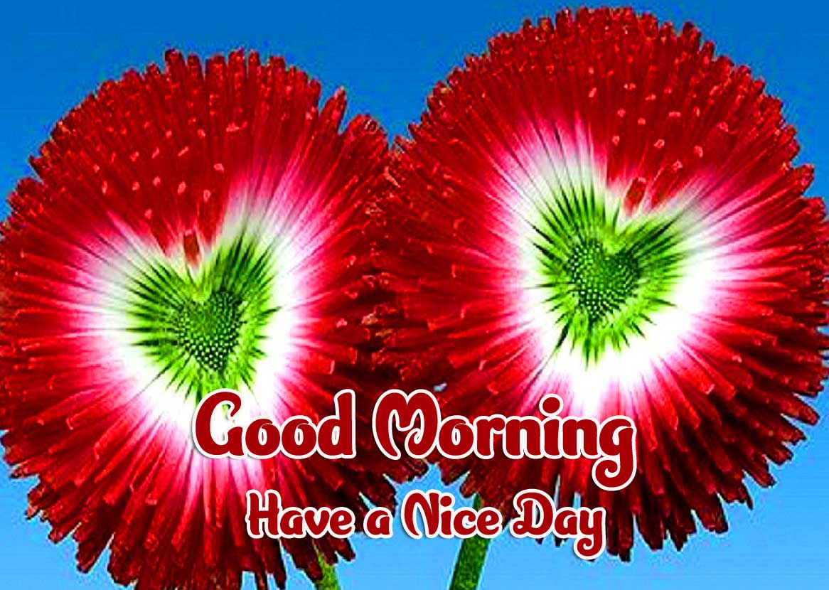 Good Morning Wishes Images pics Photo Download