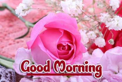 Rose Beautiful Good Morning Wishes Images Pics Download
