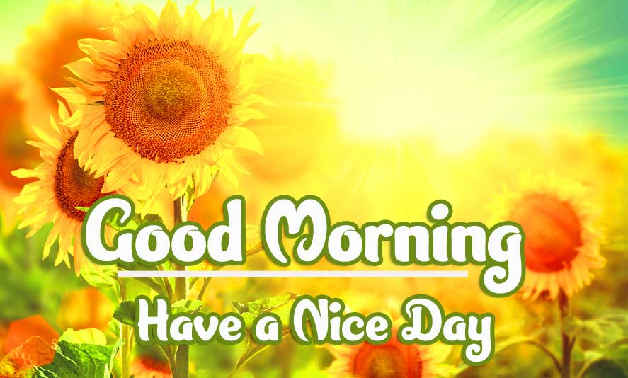 Beautiful Good Morning Wishes Images photo Wallpaper Download