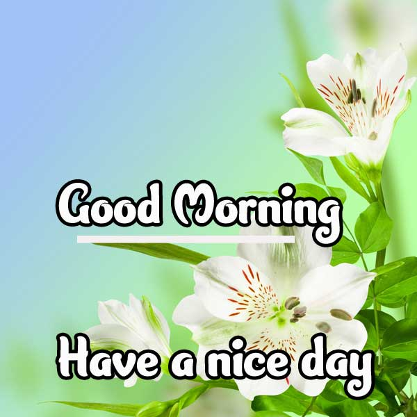 Best Beautiful Good Morning Wishes Images Pics Download
