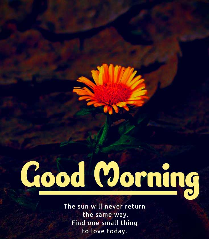Good Morning Wishes Images Pics Wallpaper Free Download
