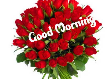 Beautiful Good Morning Wishes Images Wallpaper Free Download