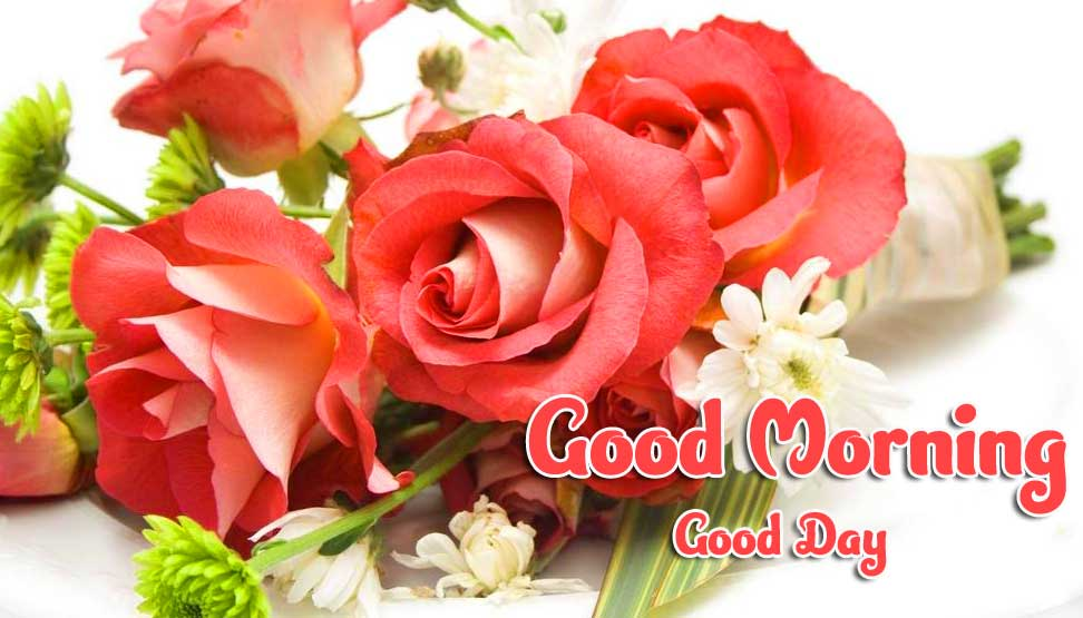 Rose Free Beautiful Good Morning Wishes Images Pics Download
