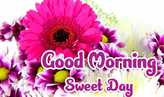 Top Free Beautiful Good Morning Wishes Images Pics Download