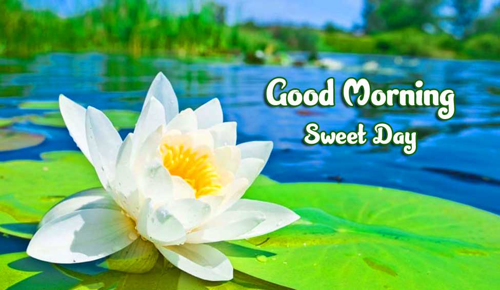 Beautiful Good Morning Wishes Images photo free download