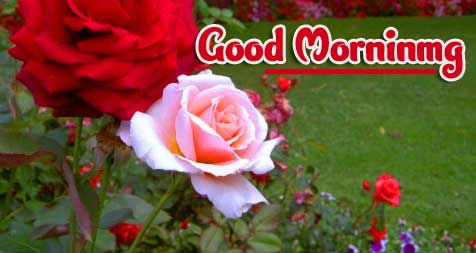 Good Morning Wishes Images Pics For Girlfriend