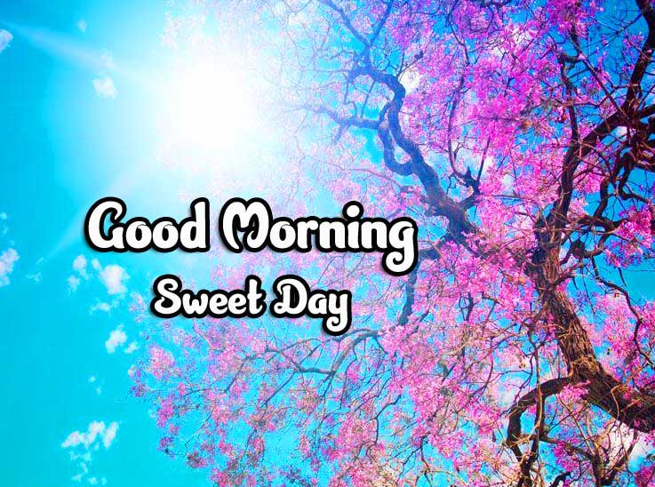 Beautiful Good Morning Wishes Images Pics photo Download