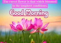 Flowers Good Morning Wishes Download 92