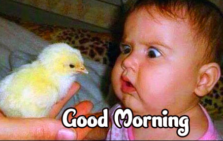 Latest Free Funny Good Morning Wishes Pics Wallpaper Download