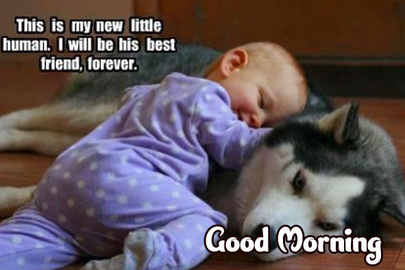 Funny Good Morning Wishes Wallpaper Pics Download