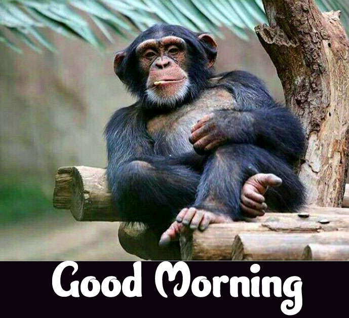 Funny Good Morning Wishes images Pics Download