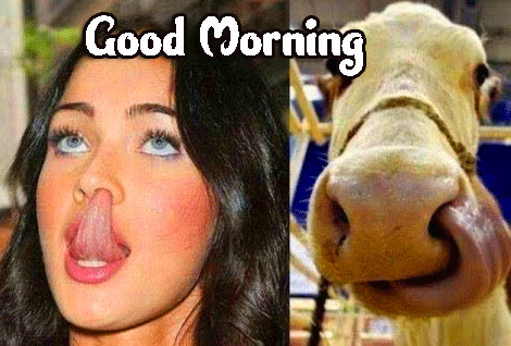 Funny Good Morning Wishes Images Download 70