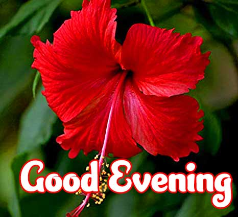New Free Good Evening Wishes Images Pics Download