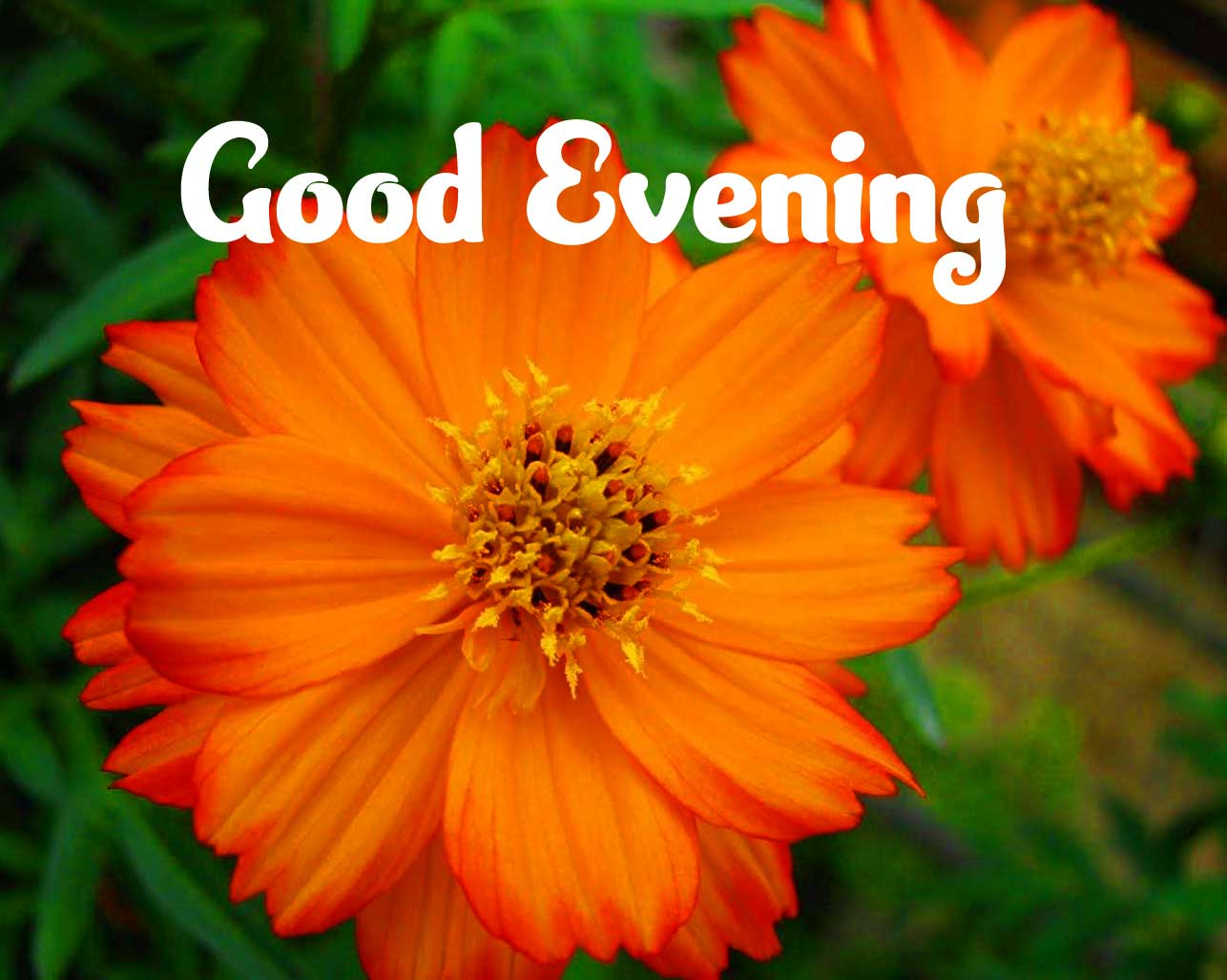 Good Evening Wishes Images Wallpaper HD Download
