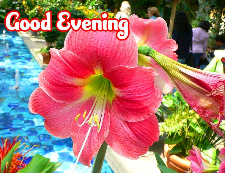 Good Evening Wishes Images photo Pics Download
