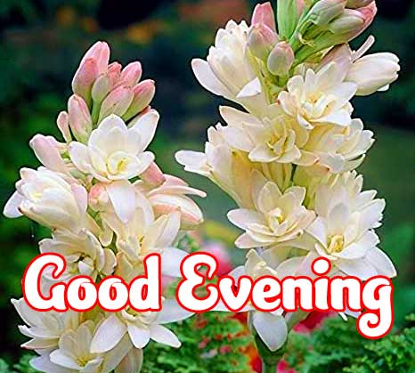 Good Evening Wishes Images Pics Wallpaper hd down Load
