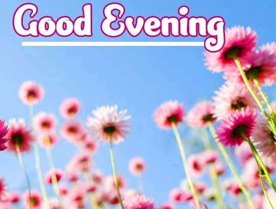 Good Evening Wishes Images Pics Download Free