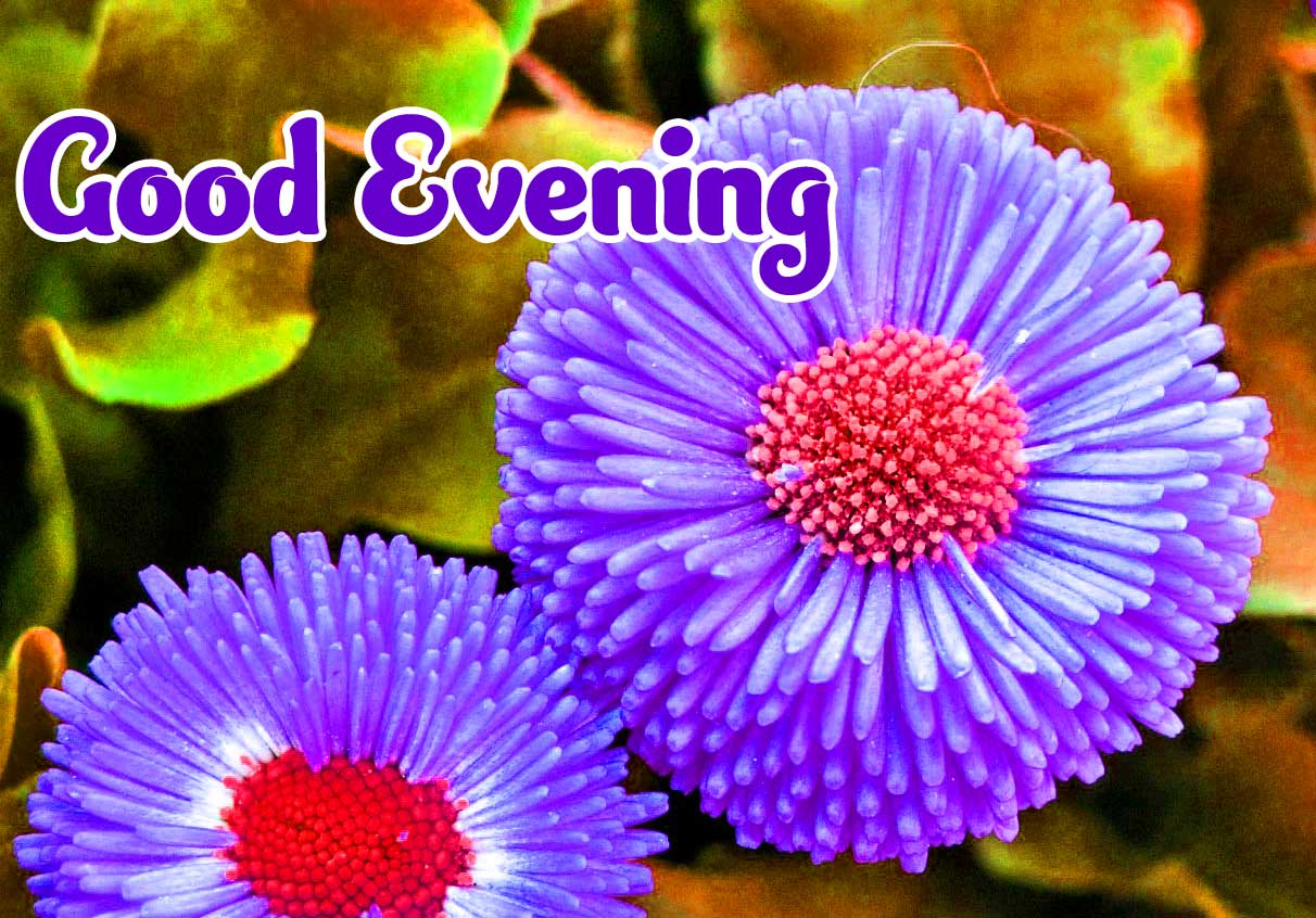 Good Evening Wishes Images Pics Wallpaper free Download