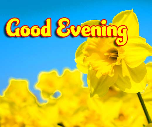Beautiful Good Evening Wishes Images Wallpaper Free for Facebook