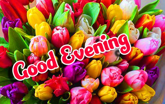 Beautiful Good Evening Wishes Images Pics Wallpaper free Download