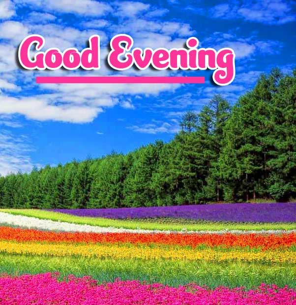 Beautiful Good Evening Wishes Images Pics for Whatsapp