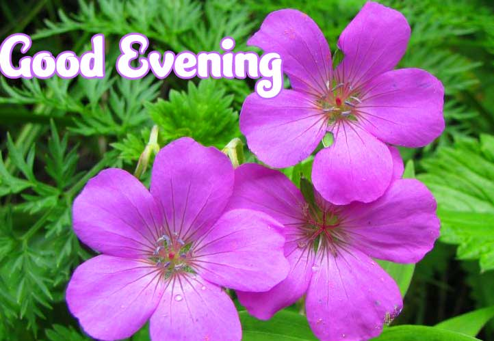 Beautiful Good Evening Wishes Images Wallpaper Free Download