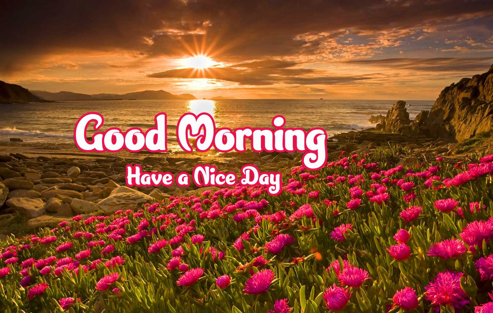 Good Morning 4k Ultra Images Pics Wallpaper Free Download