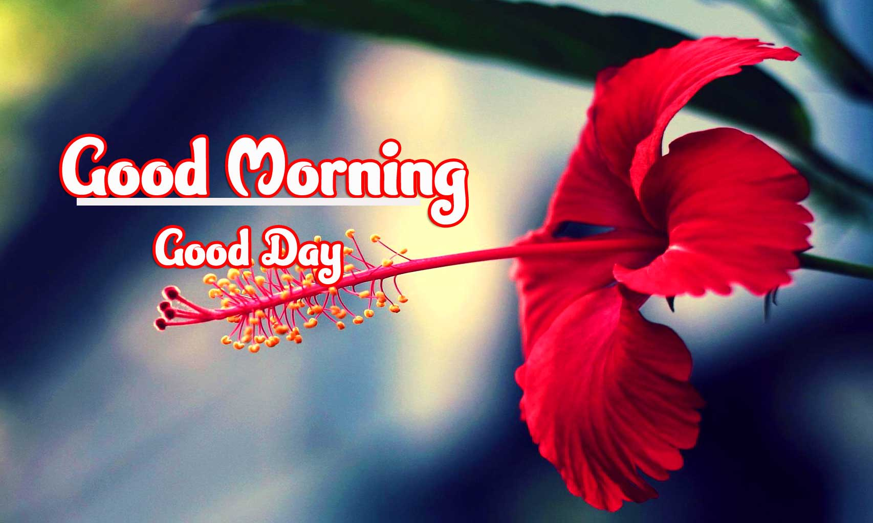 Best Good Morning 4k Ultra Images Pics Download