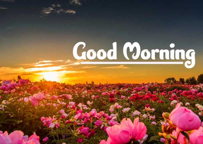 Good Morning 4k Ultra Images Pics Free Download